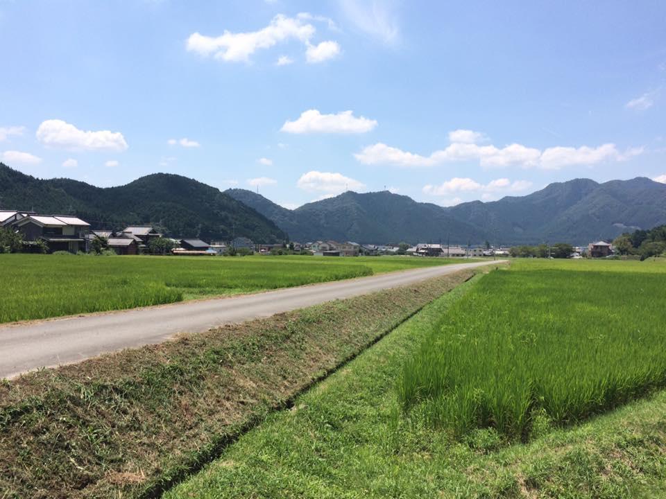 集落の草刈り